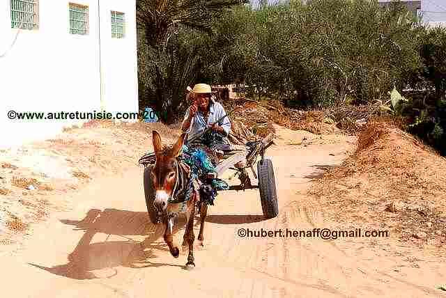 Djerba par les pistes – 1 journée