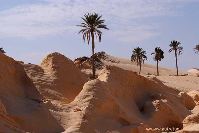 Tozeur en Terre Saharienne