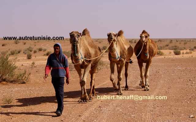 Festival printemps du Sahara à Ksar Ghilane