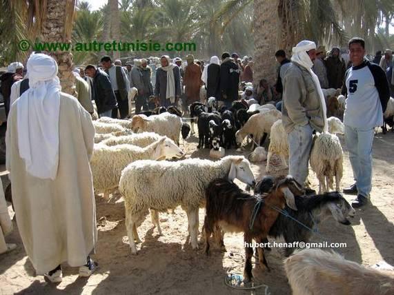 Tunisie : Entre Ksours et Oasis