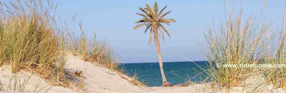 En Terre Djerbienne et Berbère