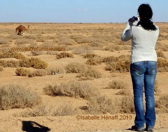 Les animaux du désert, cette faune secrète de Tunisie – 02/2014