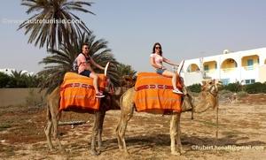 Balade à dromadaire ou à cheval à Djerba