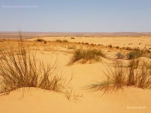 Quelques touffes d'herbes sur des dunettes en bordure du désert du Sahara en Tunisie