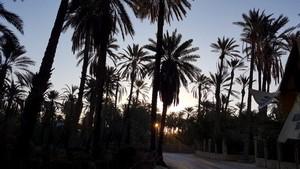 Excursion privative Autre Tunisie à Tozeur – Février 2019